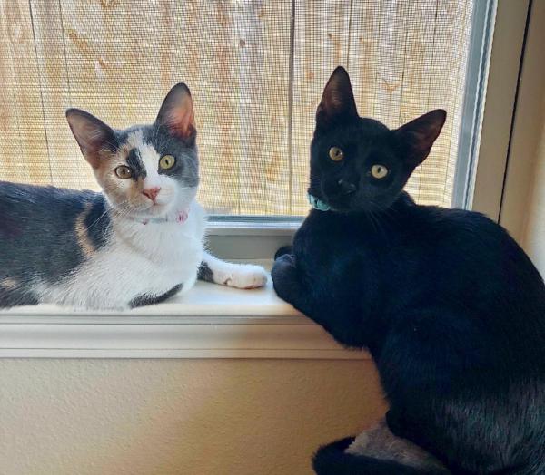 Luna(calico) and Binx(black)