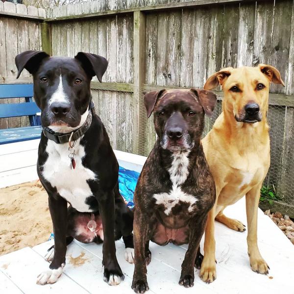 Cole, Mae and Peeka